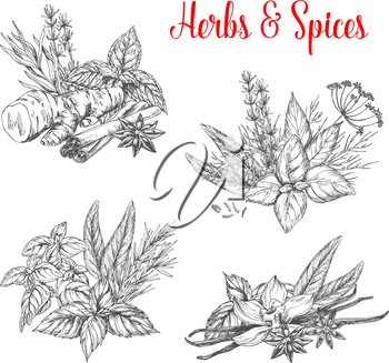 Herbs and spices bunches sketch icons. Vector set of natural organic spice of chili pepper and oregano or green basil, dill or parsley seasoning and thyme or cumin flavoring, sage or bay leaf