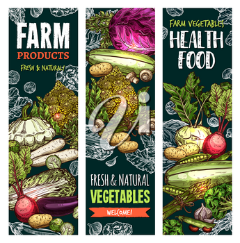 Vegetables and fresh veggies farm market healthy food sketch banners. Vector natural organic products of cauliflower and broccoli cabbage, radish or zucchini squash and carrot, pumpkin or tomato