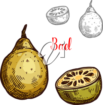Bael yellow tropical fruit sketch. Vector botanical design of matoon or stone apple whole or cut with seed for farm fruit market, juice or jam package