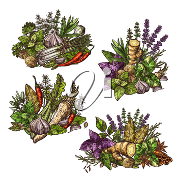 Herbs and spices in heaps or bunches. Vector seasonings and cooking condiments ginger and mint, cinnamon and basil, dill and cumin, chili pepper and garlic, sage and bay leaf, lavender and leek sketch