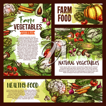 Vegetables and fresh healthy veggies food sketch posters and banners. Vector natural vegan organic avocado, vegetarian cauliflower or broccoli and red cabbage, mushroom or pumpkin and eggplant