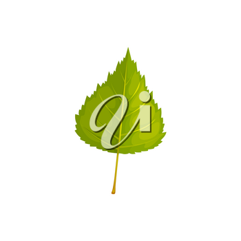 Leaf of birch tree, autumn and fall vector isolated leaf icon. Birch tree foliage, forest and plants leaves for nature autumn season