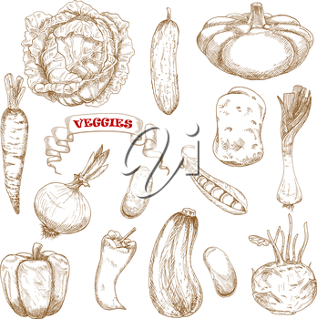 Healthy organic cabbage, carrot, pepper, potato, onion, cucumber, zucchini, pea, pattypan, squash leek kohlrabi and common bean vegetables. Sketched vegetables on white for agriculture or vegetarian f