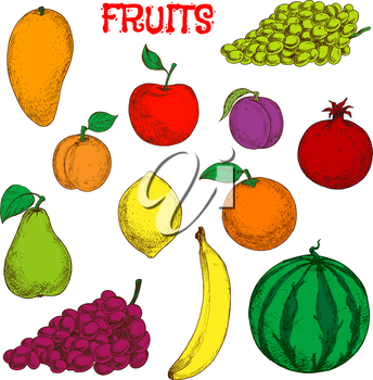 Colored sketches of fruits for agriculture design with flavorful tropical mango, juicy lemon, sweet orange and banana, bunches of violet and green grapes, red apple and pomegranate, fresh plum and pea