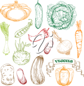 Wholesome fresh orange carrot and bell pepper, green juicy cabbage and cucumber, sweet pea, kohlrabi and leek, ripe beans and potato, zucchini and patty pan squash, hot chili pepper and onion vegetabl