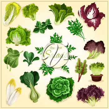 Salad leaf and vegetable greens poster with fresh healthy lettuce, chinese cabbage, spinach and bok choy, cress salad, iceberg lettuce and arugula, chicory and corn salad, batavia, radicchio and chard