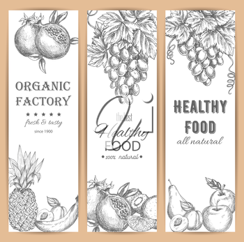 Sketched fresh garden fruit banners. Fresh pomegranate or garnet, healthy apricot and citrus orange, grapes branch and banana, pineapple or ananas and kiwi, pear and apple. Vegetarian dessert menu, ag