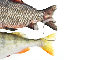 Royalty Free Photo of Fish Tails