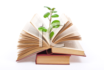 Green sprout growing from open book