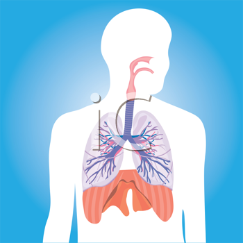 Royalty Free Clipart Image of Person's Lungs