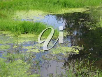 green swamp with green grass background