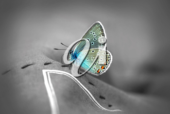 Beautiful butterfly on black and white background