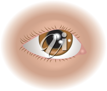 Royalty Free Clipart Image of a Human Eye