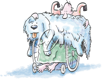 Royalty Free Clipart Image of a Man in a Wheelchair With a Shaggy Dog on His Lap