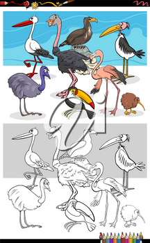 Cartoon Illustration of Funny Birds Animal Characters Group Coloring Book Page