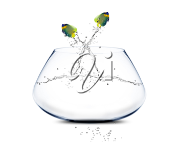 Royalty Free Photo of AngelFish Jumping out of a Fishbowl with Water Splashing
