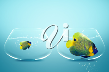 Royalty Free Photo of a Large Angelfish and Small Anglefish in Two Separate Fishbowls