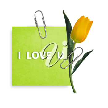 Green Note paper with paper clip and yellow tulip on white background.