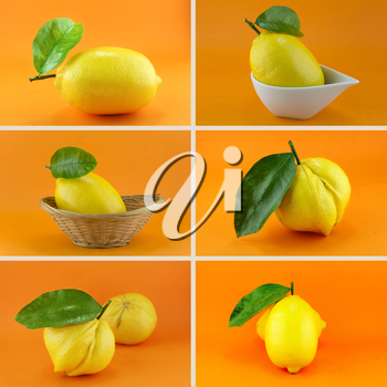 Healthy and organic food, Set of fresh Lemon.