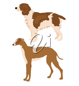 Royalty Free Clipart Image of Two Dogs