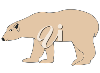 Vector illustration animal polar bear on white background is insulated