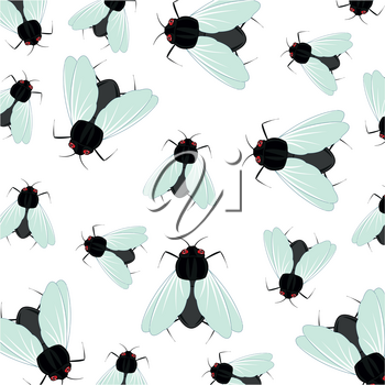Insect of the fly pattern on white background is insulated