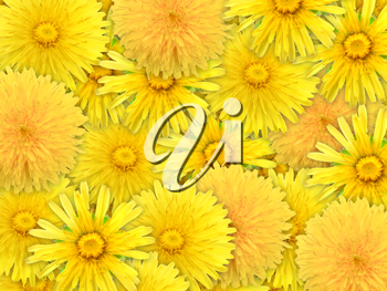 Abstract background of yelow flowers for your design. Close-up. Studio photography.