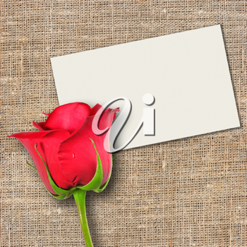One red rose and message-card on textile background. Close-up. Studio photography.