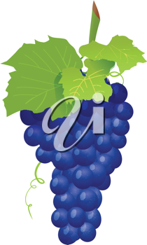 Royalty Free Clipart Image of a Cluster of Grapes