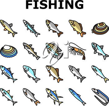 Commercial Fishing Aquaculture Icons Set Vector. Japanese Cockle And Anchovy, Common And Silver Carp, Rohu And Catle Fish, Chub Mackerel And Yellowfin Tuna Fishing Business Line. Color Illustrations