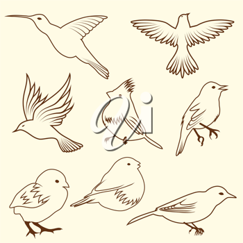 Set of differnet sketch bird. Vector illustration for design use.