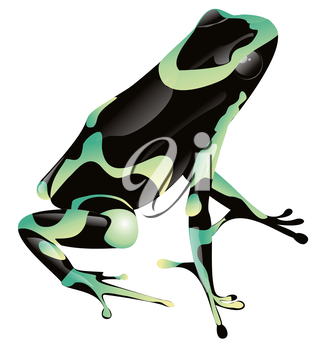 Royalty Free Clipart Image of a Frog