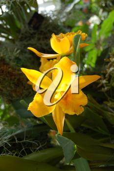 Royalty Free Photo of a Tropical Yellow Flower
