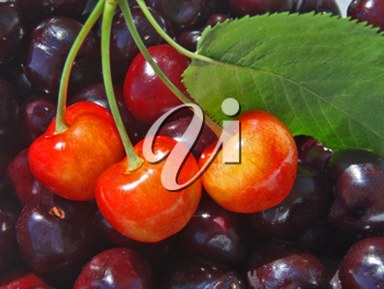 Royalty Free Photo of Cherries