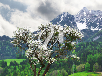 Royalty Free Photo of the Alps