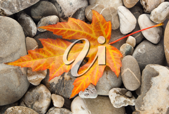 Royalty Free Photo of Fallen a Leaf on a Stone Background