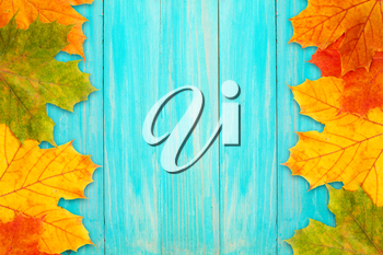 Autumn frame made of fallen leaves and a blue board