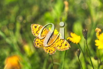 Butterfly sitting on a flower at sunny summer day