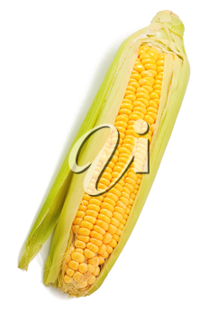Corn on the white background