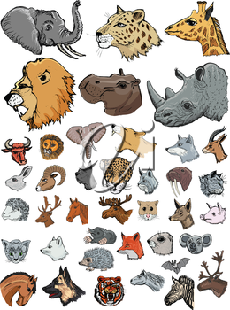 set of illustrations of different kinds of mammals