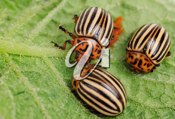 Royalty Free Photo of Bugs