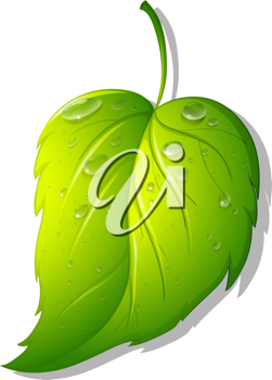 Illustration of a leaf on white