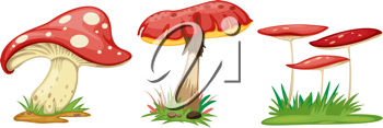 illustration of mushroom on a white background