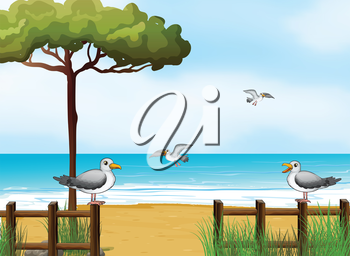 Illustration of the birds looking for foods at the beach