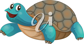 Illustration of a turtle smiling on a white background