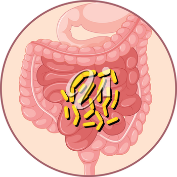 Bacteria in human stomach illustration