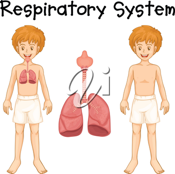 Respiratory system in boy illustration
