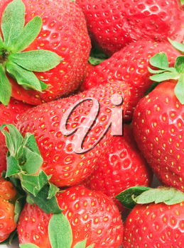 Red sweet strawberries making nice edible background