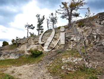 Royalty Free Photo of Trees on a Rocky Mountain
