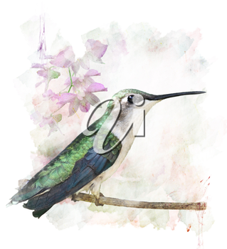 Watercolor Digital Painting Of Perching Hummingbird